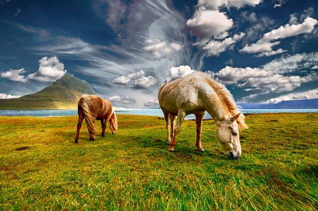 koně a krajina